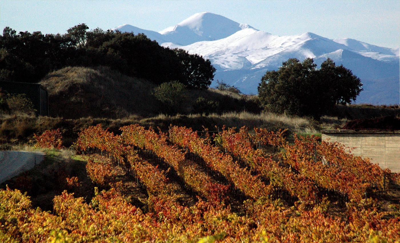 Vistas del viñedo con el pico San Lorenzo al fondo